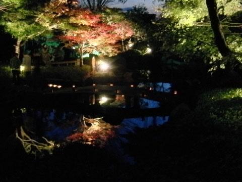 池に紅葉が映ってる