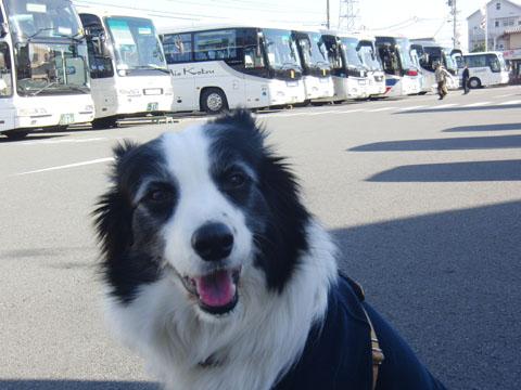 ツアーバスがいっぱい