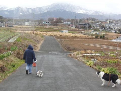 散歩は寒い