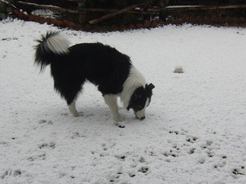 雪は美味しい?