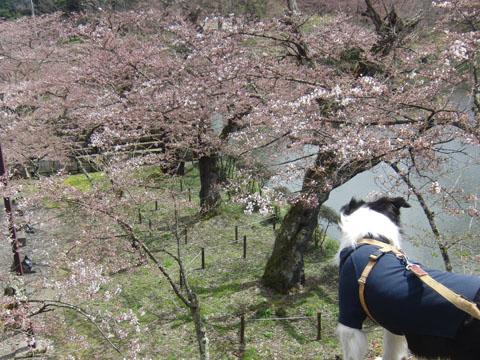 桜はまだちょっと早いね
