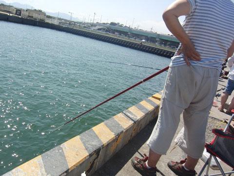 大磯港の釣り