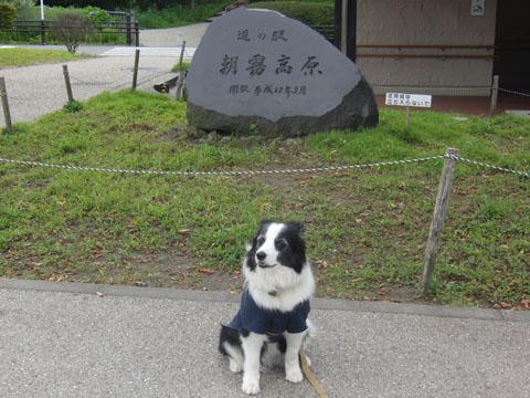 朝霧高原 道の駅
