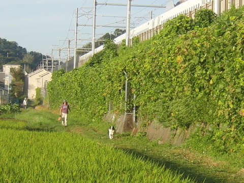 新幹線と競争