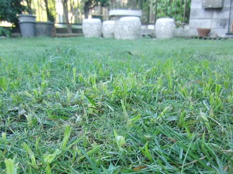 雑草が伸びてる