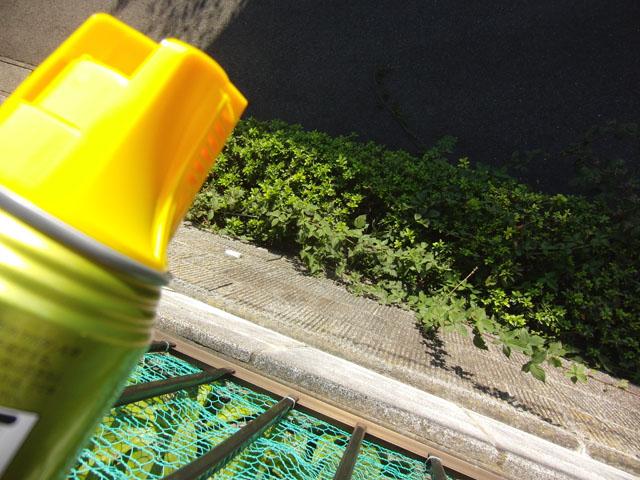 上から殺虫剤をかける