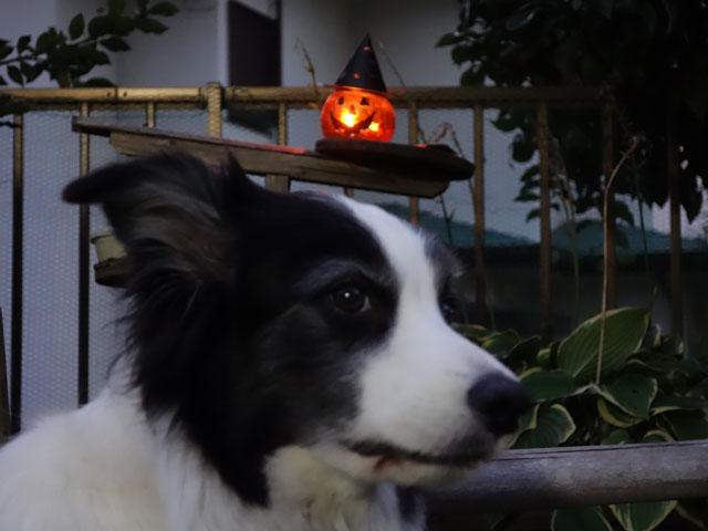 ハロウィンだって