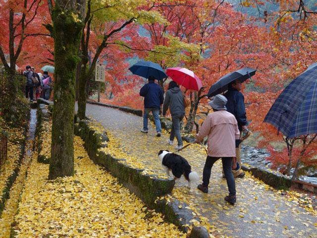 小雨の中を歩く