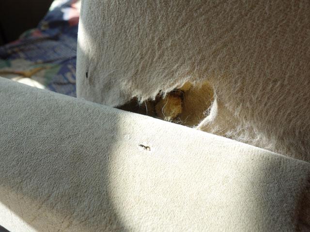 穴の開いたシート