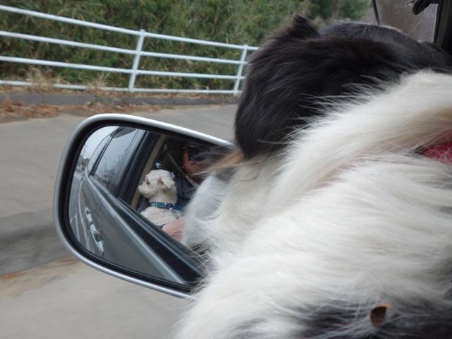 ロナと一緒にドライブ