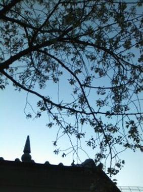 ブログ桜07