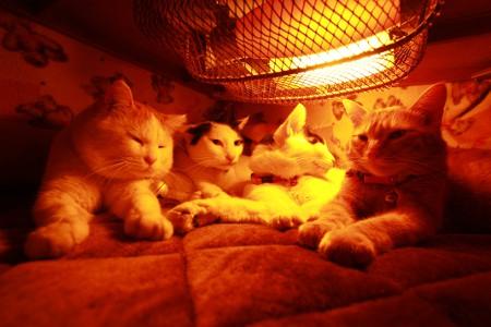 おいしそうな脚の女子校生 235脚目猫ガイジ隔離スレ [無断転載禁止]©bbspink.com->画像>2282枚