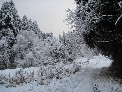 2011-12-10blog (4)