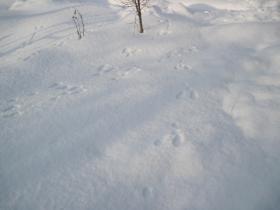 2012-01-01_20120101155940.jpg