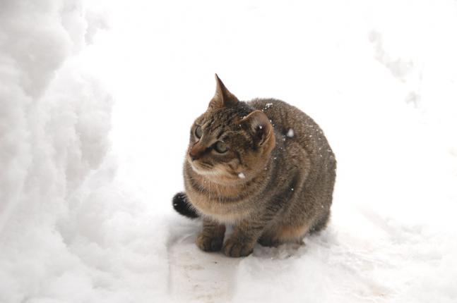 雪の中のぽー