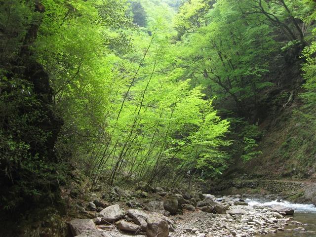 nishizawakeikoku