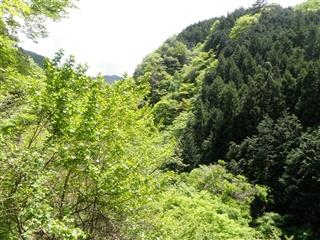 sakasagawa