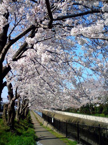 udagawaSN3A0013.jpg