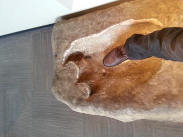 恐竜 足の大きさ