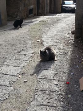 リエカ 猫1