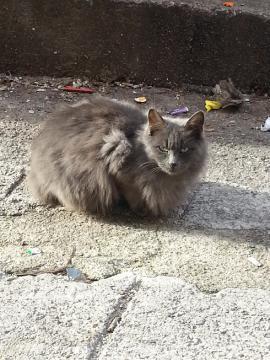 リエカ 猫2
