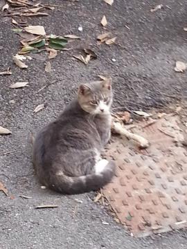 リエカ 猫4