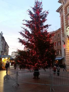 リエカ クリスマスツリー