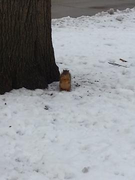 雪の中のリス 2