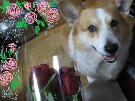 バラの花束と犬
