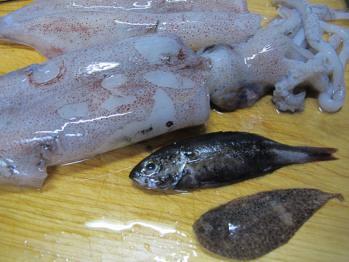 イカから出てきた魚