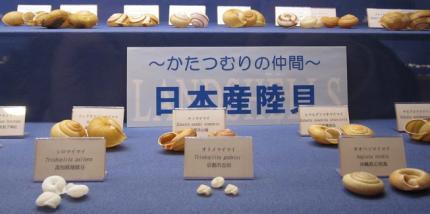 日本陸産貝