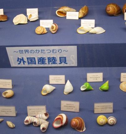 外国産陸貝