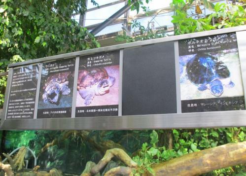 鳥羽水族館 巨カメ水槽