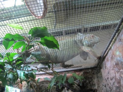 鳥羽水族館 イグアナ