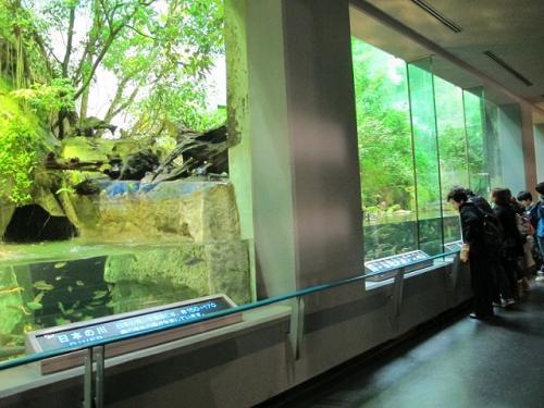 鳥羽水族館 日本の川