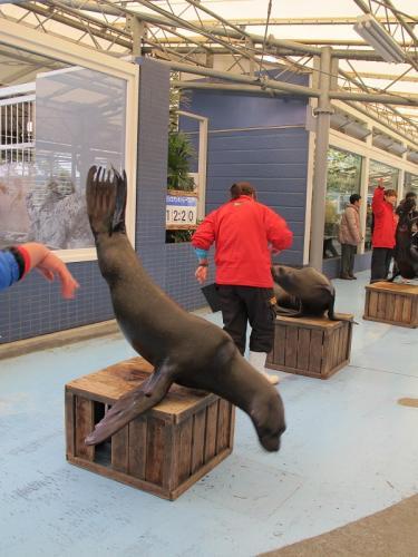 鳥羽水族館 アシカショー公開練習