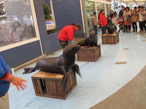 鳥羽水族館 チビッ子アシカトレーニング