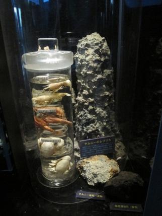 熱鉱床チムニーのレプリカと生物標本