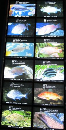 伊勢志摩の海・日本の海
