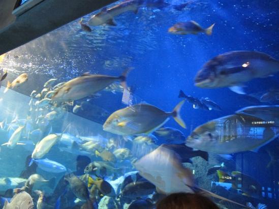 熊野灘の魚たち