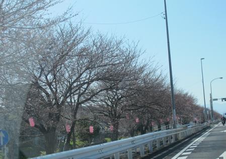一部咲きの桜