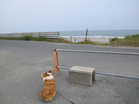 遠州灘とコギ