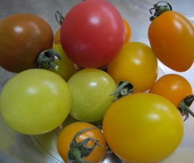 10種のミニトマト