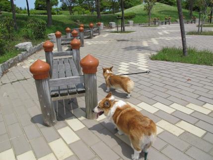日本列島 はりまや橋