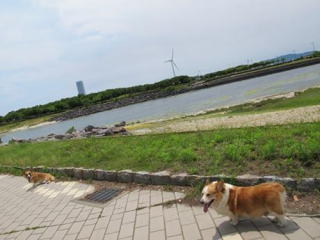 愛知 三河緑地 日本列島