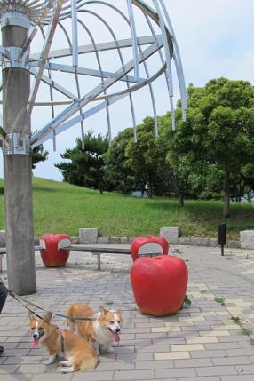 日本列島 青森 リンゴとコギ