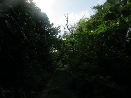 ペー浜に至るジャングル