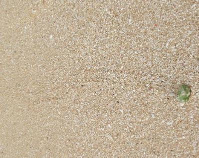 ペー浜のオカヤドカリ