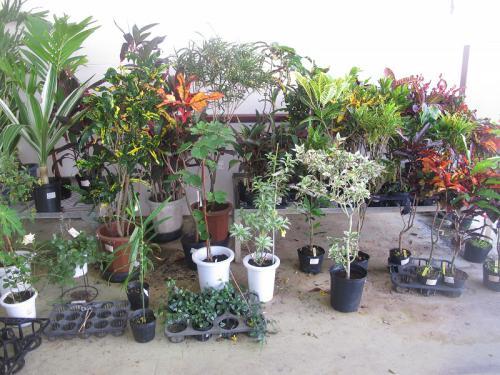 南国の植物たち