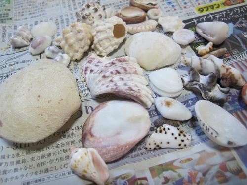 ペー浜の貝殻